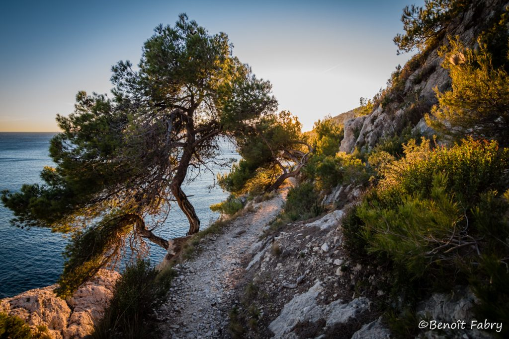 Provence_Calanque_Vesse (11)