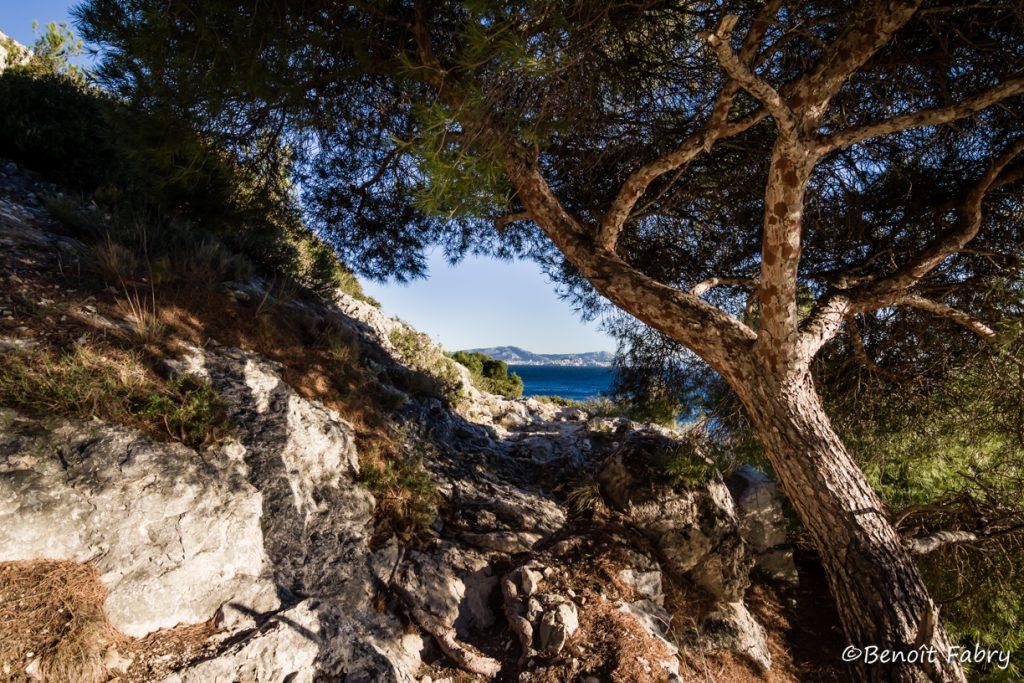 Provence_Calanque_Vesse (6)