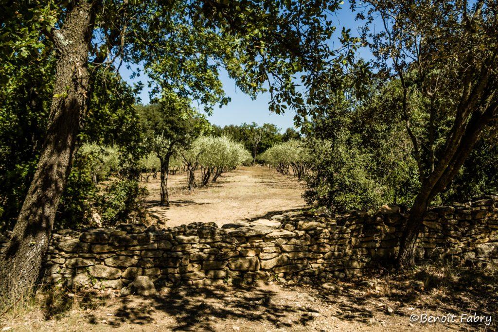 Provence_Pont_Gard (3)