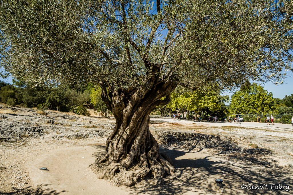 Provence_Pont_Gard (5)